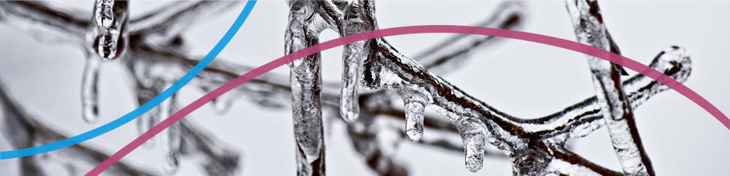 Ice covered tree branches - Banner for Supporting Artistic Practice Program
